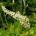 Травы, биодобавки и алкоголь